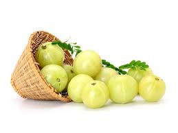Manufacturers Exporters and Wholesale Suppliers of Amla Mandsaur Madhya Pradesh